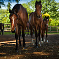 Inquisitive Horses by David Melville