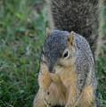 Inquisitive Squirrel by Belinda Stucki