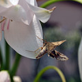Insect In Flower by Adis Serak