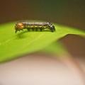 Insect Larva 1 by Douglas Barnett