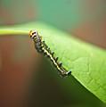 Insect Larva 3 by Douglas Barnett