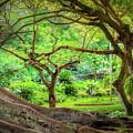 Inside Allerton Garden by Gary Eyring