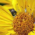 Inside Sunflower by Michael Grasseschi