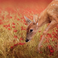 Inspecting The Poppies by Jai Johnson