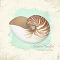 Inspired Coast V - Chambered Nautilus Shell On Board by Audrey Jeanne Roberts