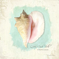 Inspired Coast Viii - Queen Conch Shell On Board by Audrey Jeanne Roberts