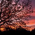 Intense Sunset Tree Silhouette by Steven Jones