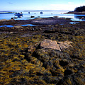 Inter-tidal Zone Deer Isle by Thomas R Fletcher