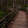Into Audubon Corkscrew Swamp Sanctuary by Mitch Spence