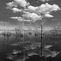 Into The Everglades by Debra and Dave Vanderlaan
