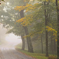 Down The Mountain, Into The Fog by Dianne Sherrill