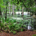 Into The Green Swamp by Carol Groenen