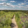 Into The Loess Hills by Susan Rissi Tregoning
