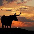 Into The Sunset by Robert Anschutz
