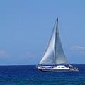 Into The Wild Blue Ocean by Pamela Walton