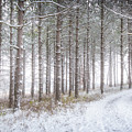 Into The Woods 3 - Winter At Retzer Nature Center  by Jennifer Rondinelli Reilly - Fine Art Photography