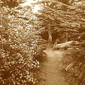 Into The Woods Sepia by Maggie Cruser
