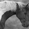 Intrigued - Black And White by Lucie Bilodeau