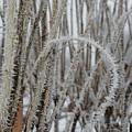 Intriguing Winter Frost by Carol Groenen
