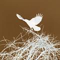 Inverted Crow by Deborah Benoit