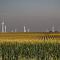Iowa Corn Field by Jim West