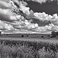 Iowa Cornfield by Mountain Dreams