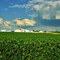 Iowa Soybean Farm by Mountain Dreams