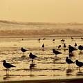 Iquique Chile Seagulls  by Brett Winn