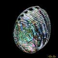Iridescence On The Half-shell by Rikk Flohr