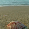 Iridescent Seashell by Juergen Roth