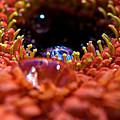 Iridescent Water Drops by Lisa Knechtel