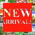 Irina Sztukowski New Arrivals by Irina Sztukowski