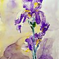 Iris 2 by Jasna Dragun