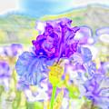 Iris 2 by Jim Thompson