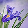 Iris by Allison Ashton