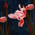 Iris And Deamy Mood  by Floriana Barbu