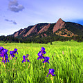 Iris And Flatirons by Scott Mahon