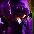 Iris by Anthony Jones