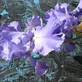 Iris Azulez by Juan Carlos Gonzalez