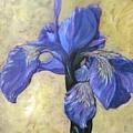 Iris by Barbara O'Toole
