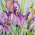 Iris Beauties by Carolyn Bell