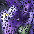 Iris Bubbles by TN Fairey