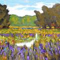 Iris By Creek by Kip Decker