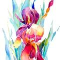 Iris Designz by Jo Lynch