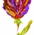 Iris Flower 2 by Lilia D