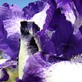 Iris Flower Art Print Purple Irises Botanical Floral Artwork by Baslee Troutman