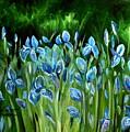 Iris Galore by Elizabeth Robinette Tyndall
