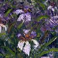 Iris Garden by Diane Martens