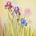 Iris Garden Ll by Mishel Vanderten