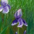 Iris Garden by Wanda Pepin